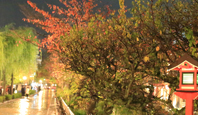 京都お座敷遊びの歴史